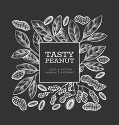 Hand drawn peanut branch and kernels design vector