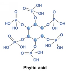 Phytic acid phosphorus vector