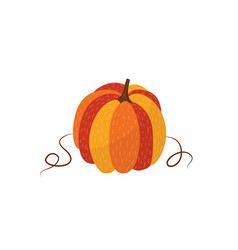 ripe orange pumpkin - autumn natural element vector image