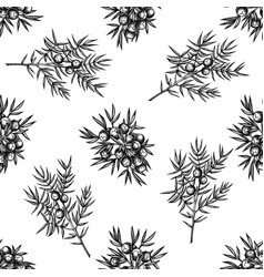 seamless pattern with black and white juniper vector image