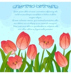 Floral card with tulips on blue background vector image vector image