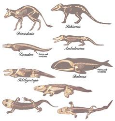 Paleontology vector image