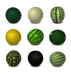 Different Varieties of Watermelons vector