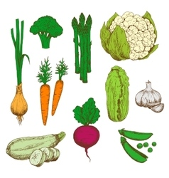 Farm vegetables retro color sketches vector image