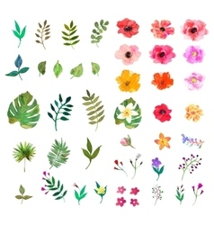 Floral set Colorful collection with leafs vector
