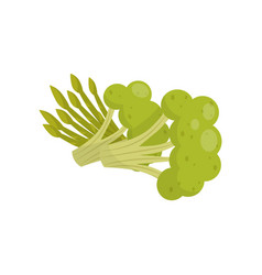 Fresh broccoli and asparagus organic healthy food vector