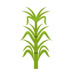 sugar cane isolated icon design vector image