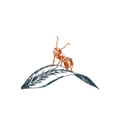 Ant sitting on a leaf graphic vector