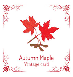 Autumn maple branch with leaves and seeds vintage vector