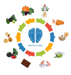 brain foods infographics brain foods infographics vector image