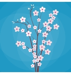 sakura japan cherry branch vector image