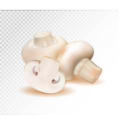 champignon mushrooms isolated on white background vector image