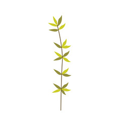 green plant branch of leaves - natural floral vector image