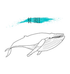 humpback whale vector image