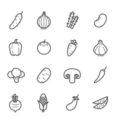 simple set vegetable icon vector image