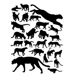 cheetah and puma silhouette vector image