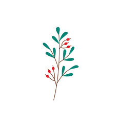 plant branch with ripe red berries and green vector image