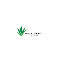 right cannabies logo design vector image
