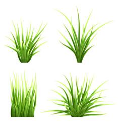 Set realistic grass vector