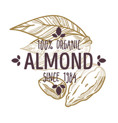 100 percent organic almond nut in shell and vector image