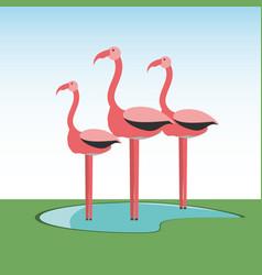 flamingos bird icon vector image vector image