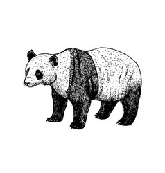hand drawn panda black white sketch vector image
