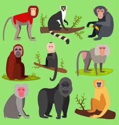 Monkeys apes breed rare animal set of vector