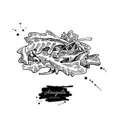 arugula leaf heap hand drawn vector image vector image