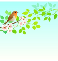 Spring Robin vector image vector image
