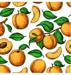 apricot colorapricot seamless pattern vector image