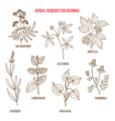 best herbal remedies for insomnia vector image
