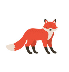 Funny furry little fox adorable lovely fluffy vector