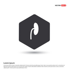 Kidney icon vector