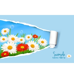 summer background with daisy vector image