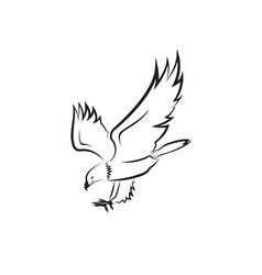 eagle design on white background bird wild vector image