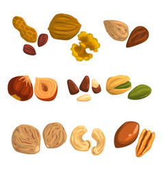 Flat icons of nuts and seeds hazelnut vector