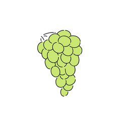 fresh green grapes in vine simple drawing vector image