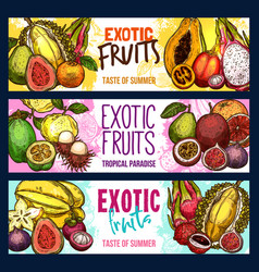 Fruit shop sketch banners of exotic fruits vector