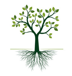 Green tree with roots on white background vector