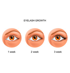 Eyelash growth before and after vector