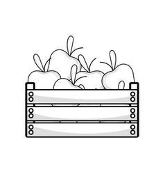 Line delicious apples fruits inside basket vector