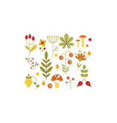 collection forest design elements herbs vector image