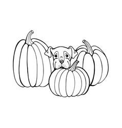 Dog with pumpkin coloring book page outlines of vector