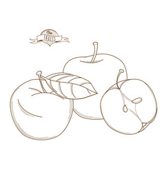 outline hand drawn apple flat style thin line vector image