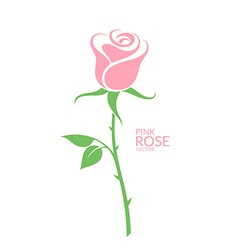 Pink rose Isolated flower on white background vector