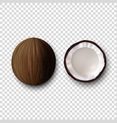 3d realistic whole and halves coconut icon vector