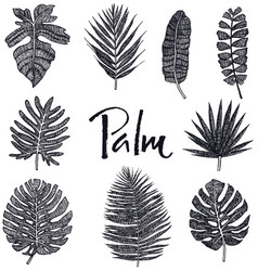 black palm leaves hand drawing isolated object vector image