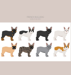 French bulldog different varieties coat color vector