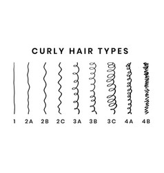 Hair types chart with all vector