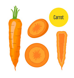 set of carrot sliced chopped sweet carrot in flat vector image